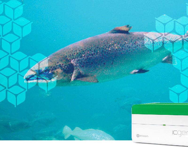 identifish salmone
