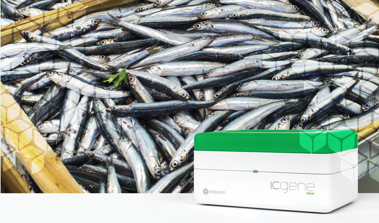 identifish sardina