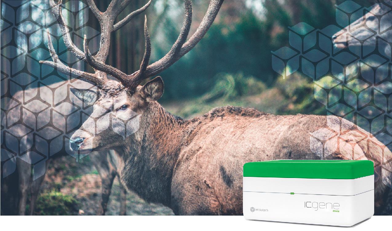 identimeat deer